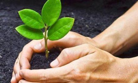 10 cosas que debes aprender para cuidar el ambiente